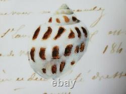 WILLIAMS SONOMA La Mer signed Marc Lacaze 18 3/4 Serving platter seashells